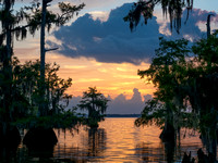 Blue Cypress Lake Before Sunrise