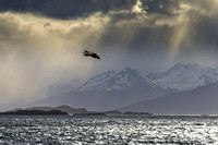 Petrel Fly By