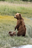 Mom With Spring Cubs
