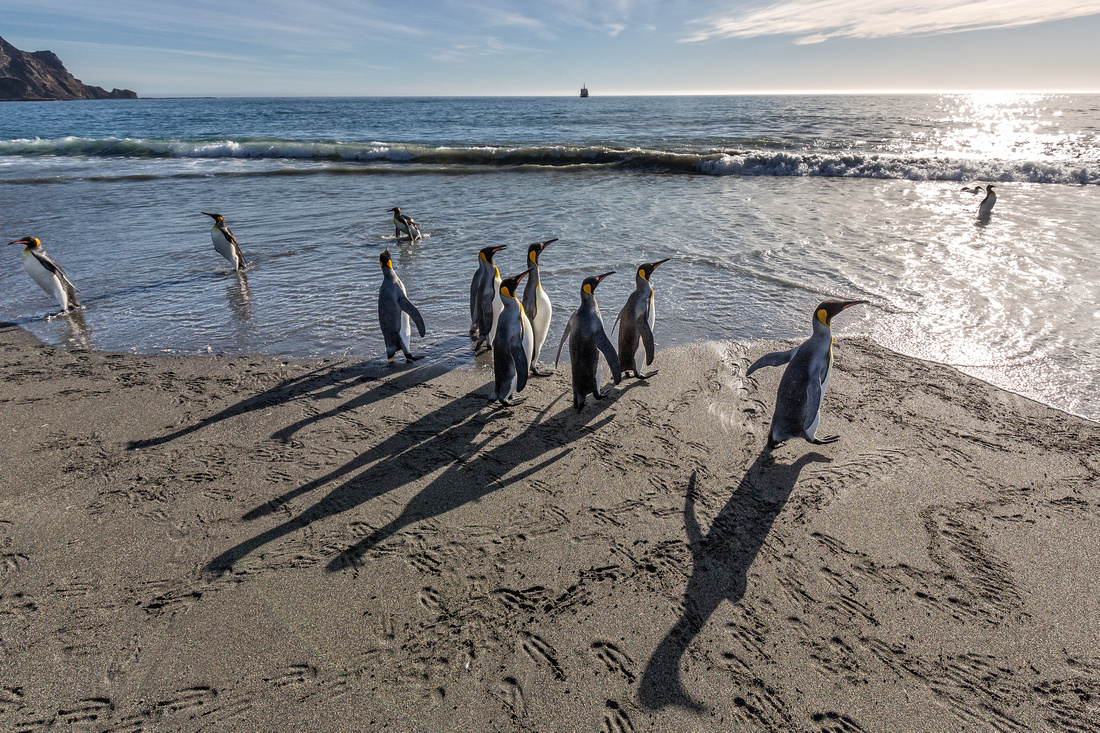 Penguin Shadows