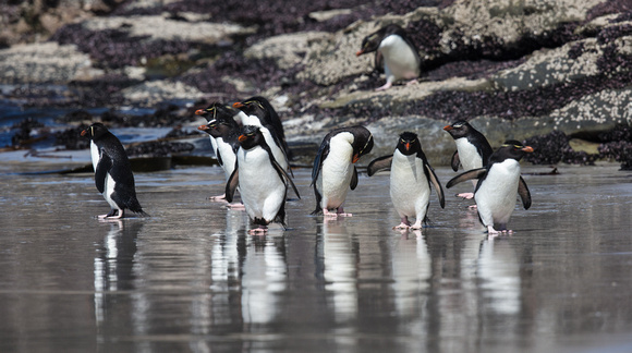 Rockhopper Reflections
