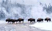 Yellowstone in Winter 2018
